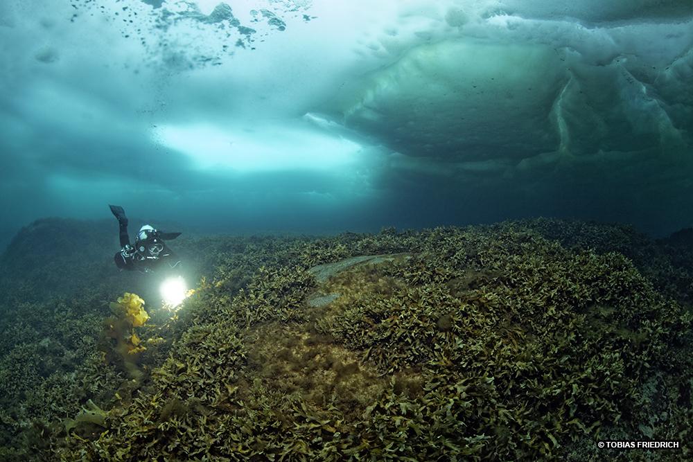 La Balade du Jour : Groenland, les Icebergs en traîneau ! Par Tobias Friederich 190-tb5