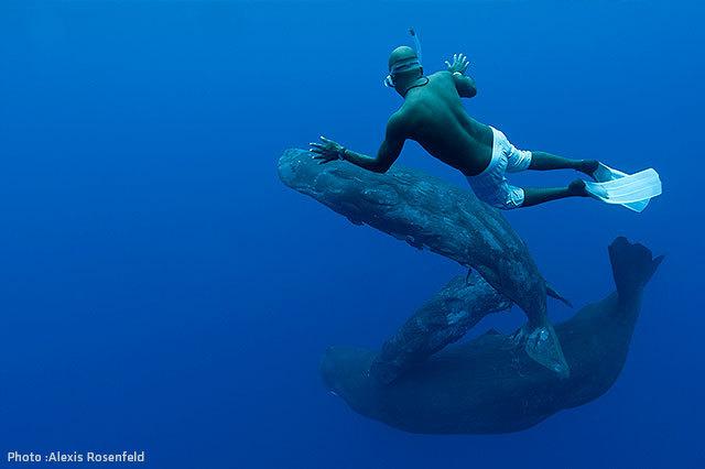 Stor Dick svømmere
