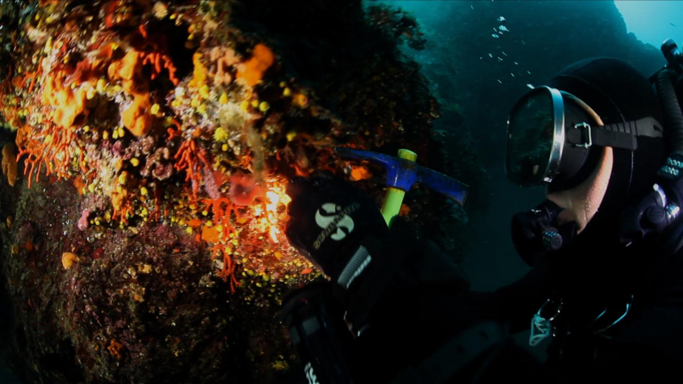 Incontri campioni di corallo