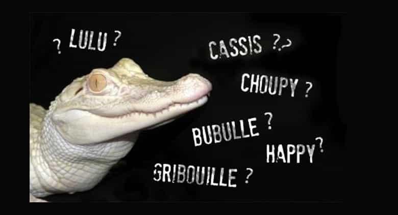 trouvez un nom aux deux alligators albinos