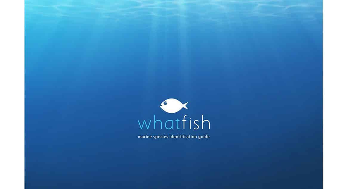 what-fish-enfin-une-app-didentification-simple