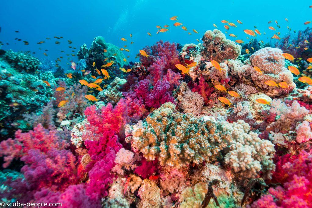 scuba-people-mag-cruises-sultans-alyses-26