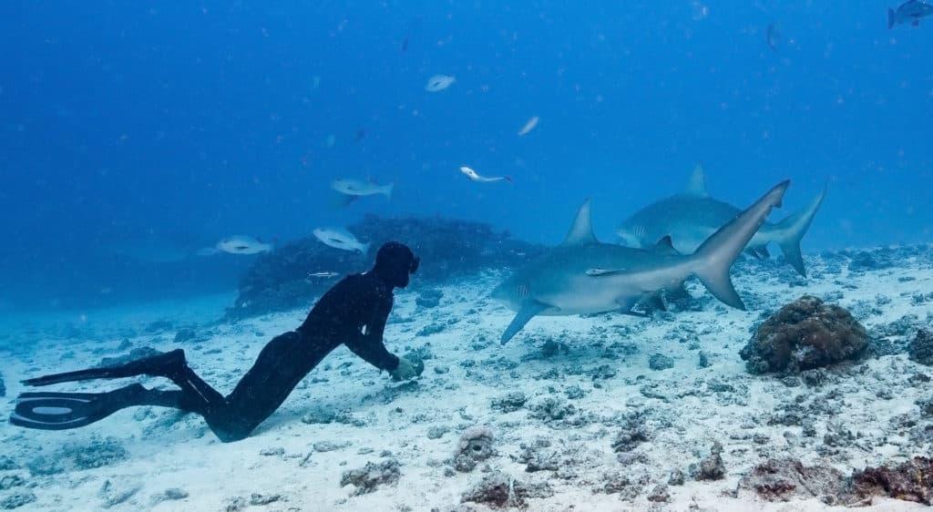 ecotourisme requin reunion