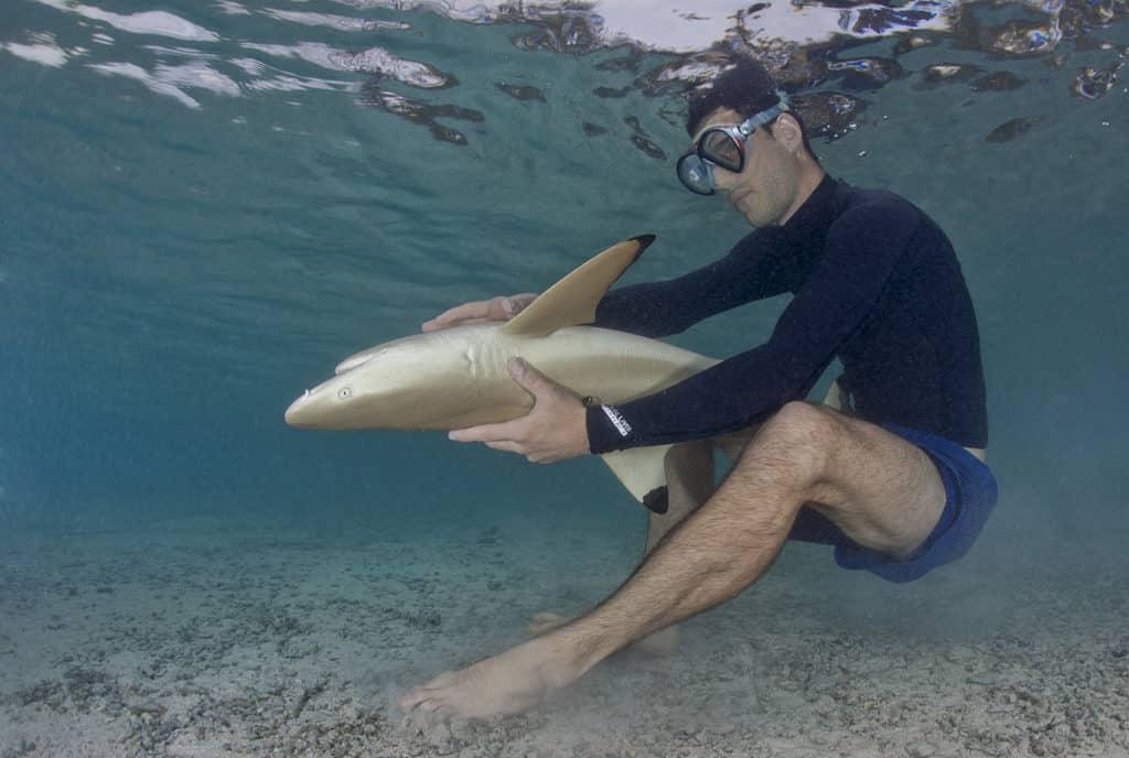 requin retourner