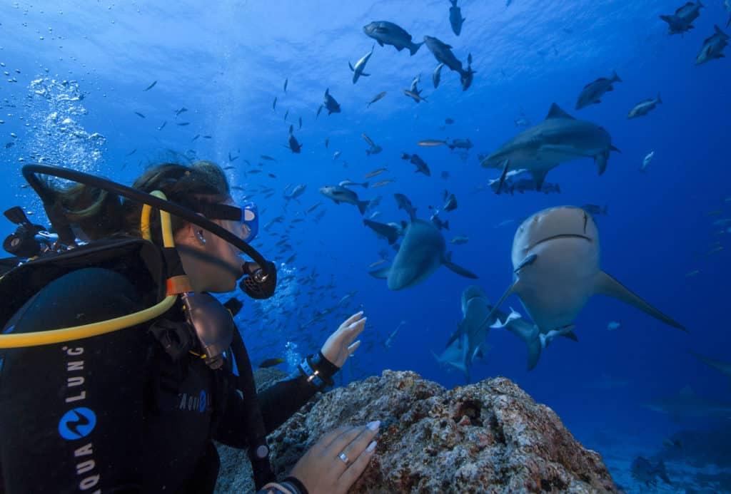 requins sans agressivité