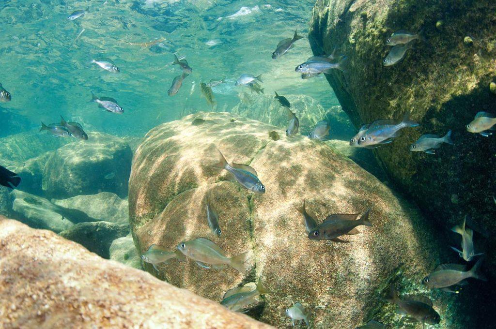 تحت بحيرة تنجانيكا