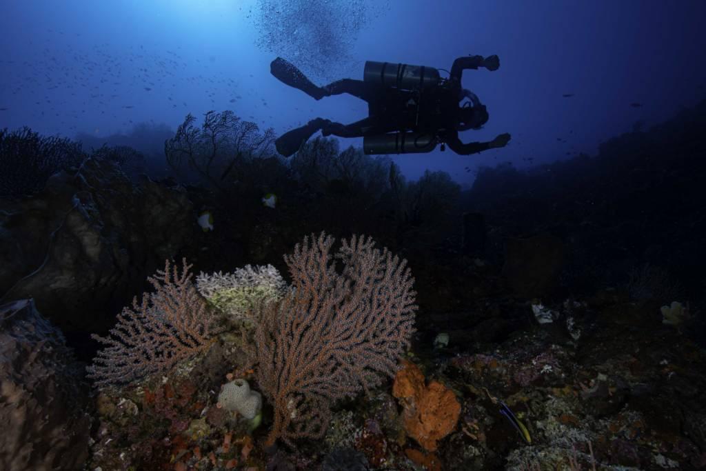 スラウェシ島のtec ccr