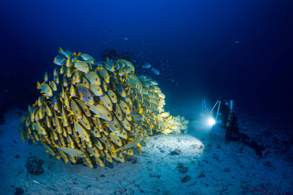 sweetlips in raja ampat