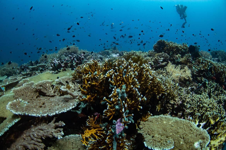 jardin de corail indonesien